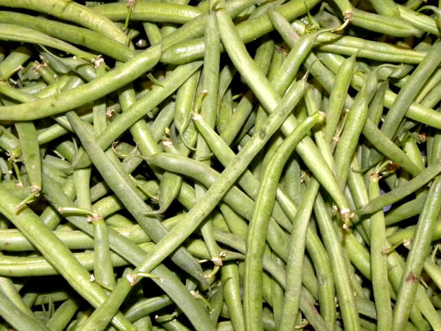 How to Grow Snap Beans